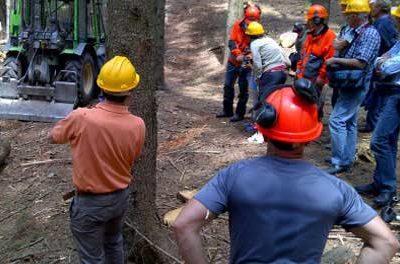 Concorso Regione Piemonte Operai Forestali