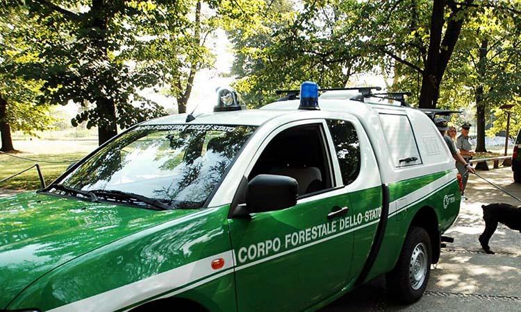 Come diventare Guardia Forestale