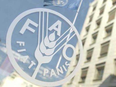 FAO: Offerte di Lavoro
