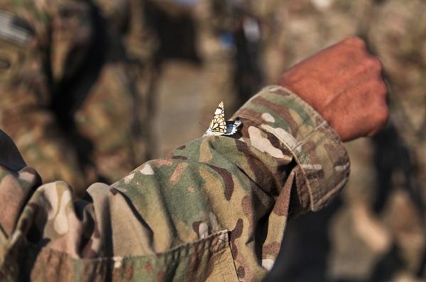 Concorso Marescialli Forze Armate